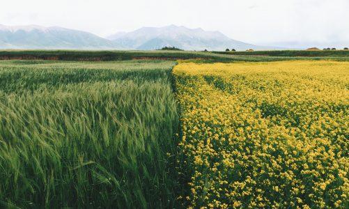 Najpopularniejsze maszyny rolnicze